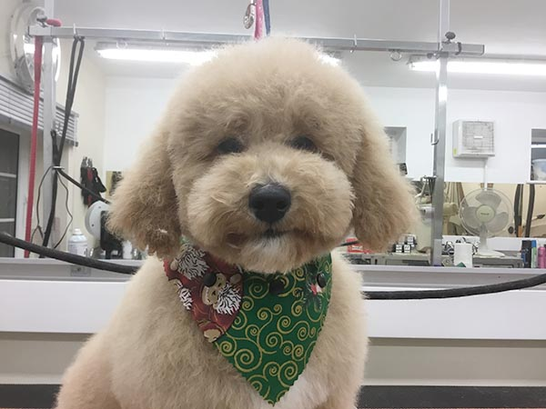 Dog with a fresh cut