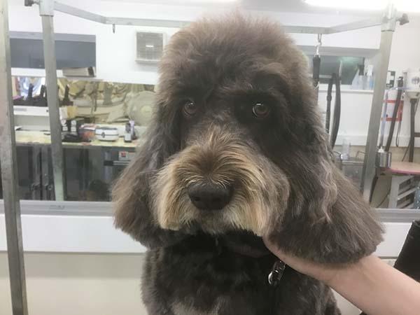 Black dog after cut