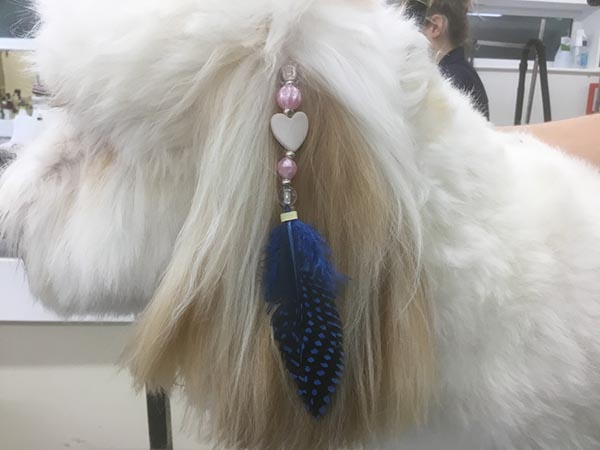 Dog with jewellery